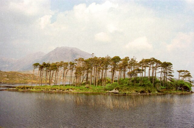 Pines Island, County Galway - May 1994