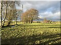 SJ9338 : Fields and Coppices near Leadendale by Jonathan Clitheroe