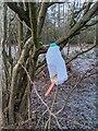 TF0820 : Makeshift bird feeder by Bob Harvey