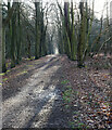 TG2728 : Tree lined Footpath by David Pashley