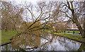 TQ2782 : Tree as seen from bridge, Regent's Park by Free Man