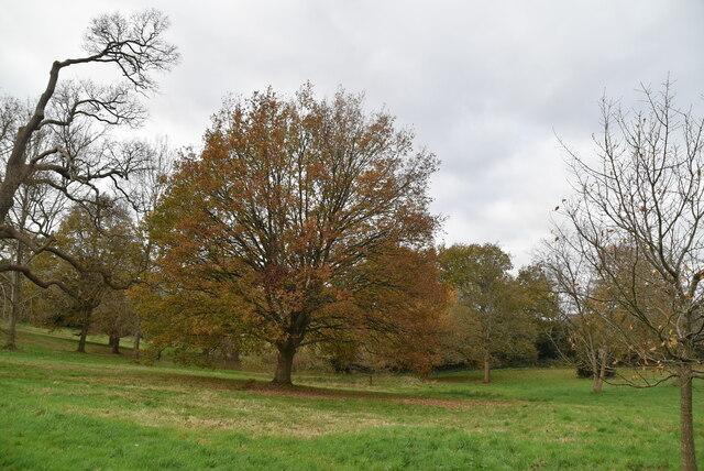 Calverley Park by N Chadwick
