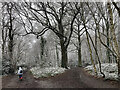 TQ4568 : Petts Wood, Chislehurst (1) by Stephen Richards