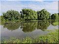 TL4356 : A wet Grantchester Meadows by Hugh Venables
