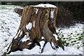 SP4774 : Tree stump near Bilton by Stephen McKay