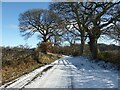 NY4653 : The road to Wetheral Priory by Adrian Taylor