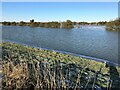 TF3902 : Bushes and floodwater - The Nene Washes by Richard Humphrey