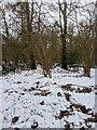 TF0820 : Snow melt by Bob Harvey