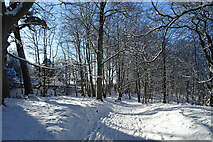 NJ3558 : Path through the Woods by Anne Burgess