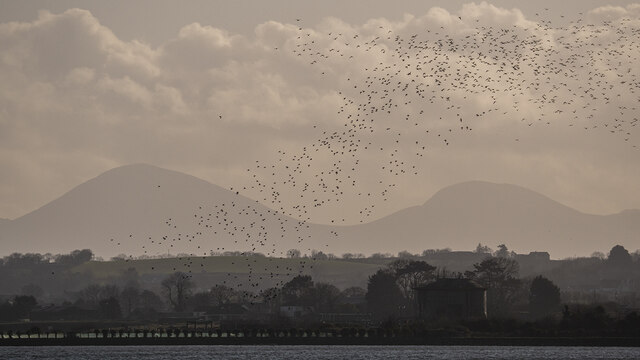 The Mournes from Newtownards
