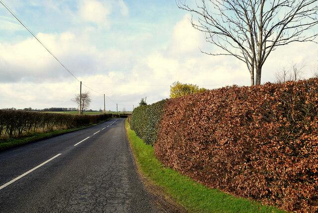 Multi-coloured hedges along Gortnagarn Road