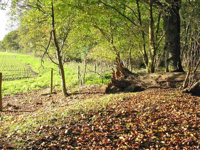 RSPB Garston Wood
