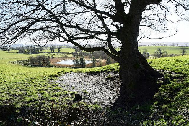 Tree and shadow, Lislane