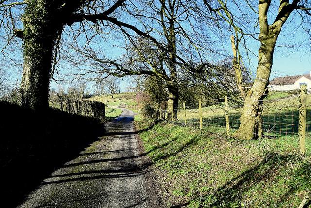 Tree shadows along Shantonagh Road
