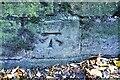 SK5640 : Benchmark on wall on SW side of Waverley Street by Luke Shaw