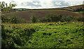 SX8464 : Field by Woodhuish Lane by Derek Harper