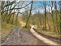 SD7705 : The Outwood Trail, South of Ringley Road by David Dixon