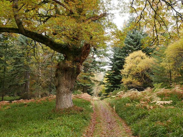 Path, Cawdor Wood