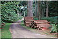 SU2607 : Forestry product, Holidays Hill Inclosure. New forest by Clive Perrin