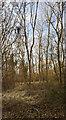 TF0820 : Sunlit slenderness by Bob Harvey