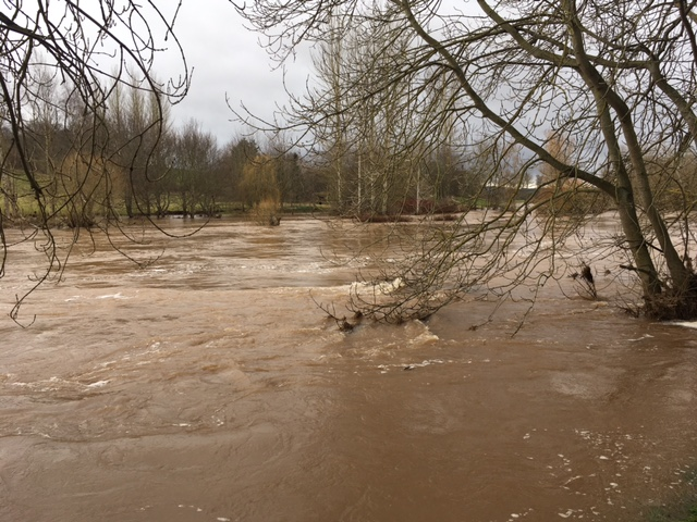 River Teviot in flood at Ormiston