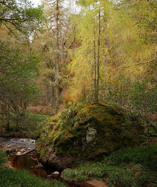 Grey Stone, Cawdor Wood