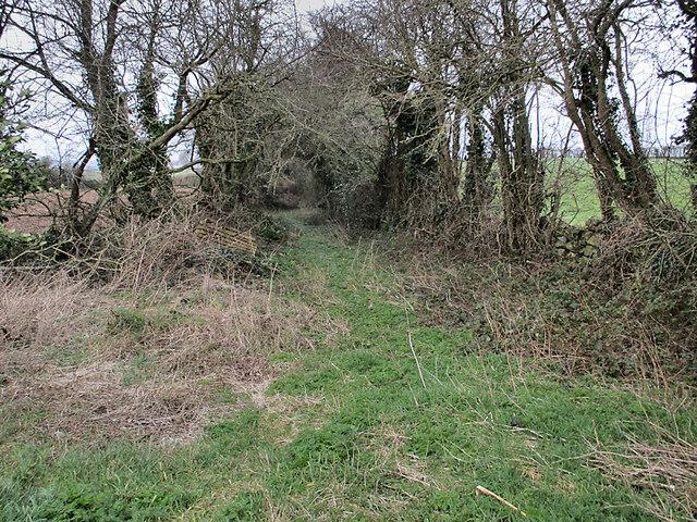 Disused Laneway