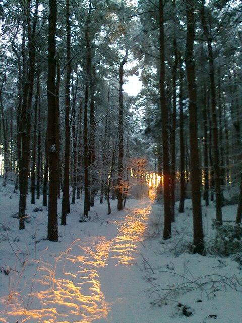 Winter sun in the Kame Wood