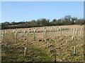 ST5461 : Plenty of room for more trees by Neil Owen
