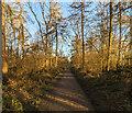 TF0820 : A woodland morning by Bob Harvey