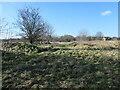 SE3221 : Remains of a field boundary, Balne Lane Fields by Christine Johnstone