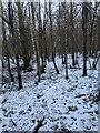 TF0820 : Snowy floor by Bob Harvey