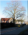 ST3092 : Deciduous trees in late winter, Llantarnam, Cwmbran by Jaggery