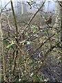 TF0820 : Lichen renewed by Bob Harvey