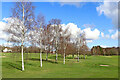 SO8994 : Young birch trees on Penn Common golf course, Staffordshire by Roger  Kidd