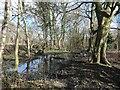 SE3423 : Flooded area, Stanley Marsh nature reserve by Christine Johnstone