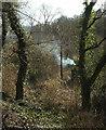 SX8667 : Smoke, Bickley Mill valley by Derek Harper