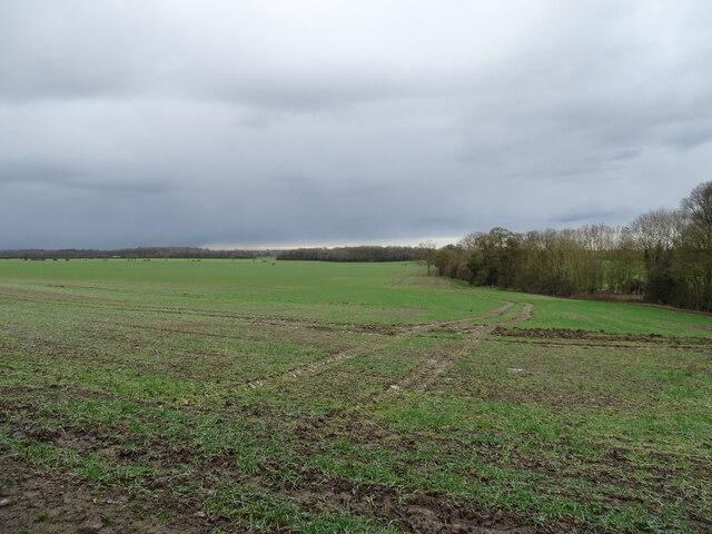 Field near Madingley