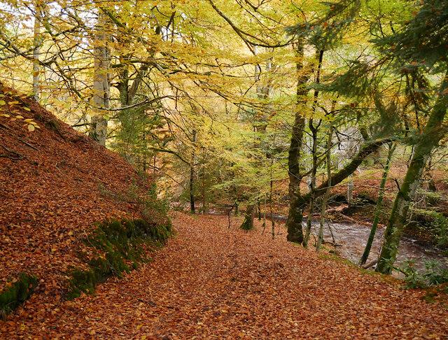 Path, by the Riereach Burn