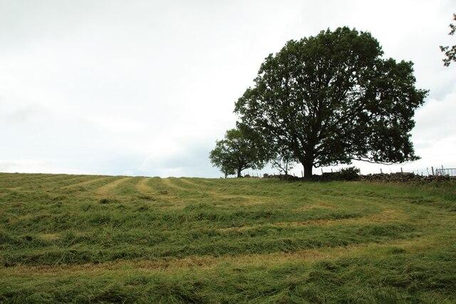 Mown grass field west of Long Liberty Farm