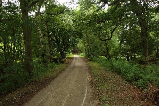 Track through Low Scargill Plantation