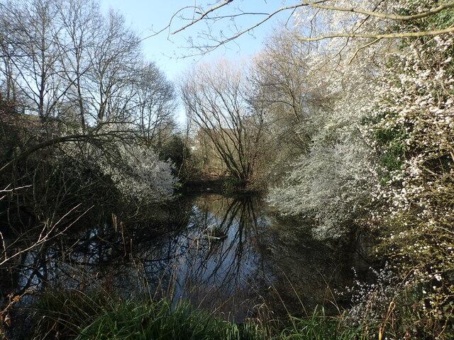 The Slade Ponds