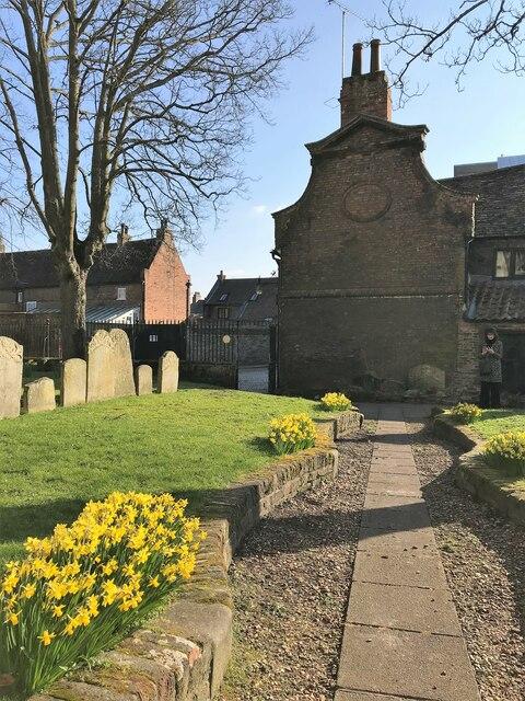Daffodils in the graveyard of St Nicholas' Chapel, King's Lynn,