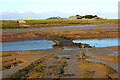 TQ9590 : Causeway to Potton Island by David Kemp