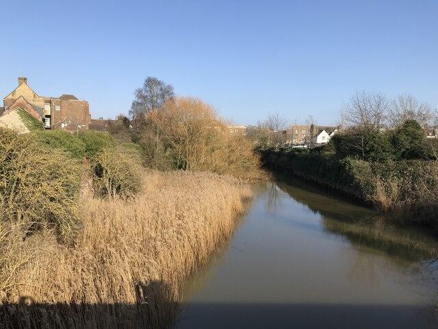 Reeds in the Mill Fleet, King's Lynn
