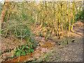 SD8003 : Prestwich Clough, Deyne Brook by David Dixon