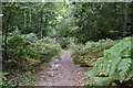 TQ8622 : Footpath, Flatroper's Wood by N Chadwick