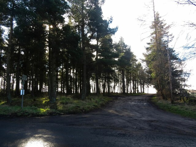 Footpath to Star Moss