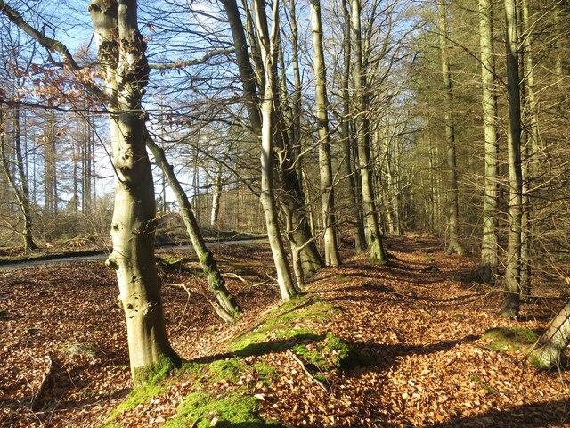 Path running parallel to Freuchie Road through Kirkforthar Wood