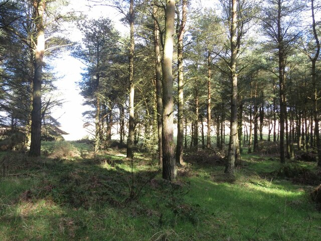 Woodland on Lady's Hill